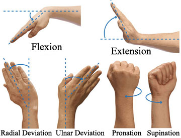 Wrist and Hand terms